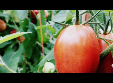 Tomato Picture, Cinema